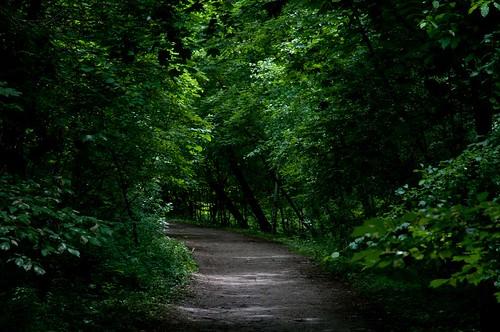 365-51: A Path