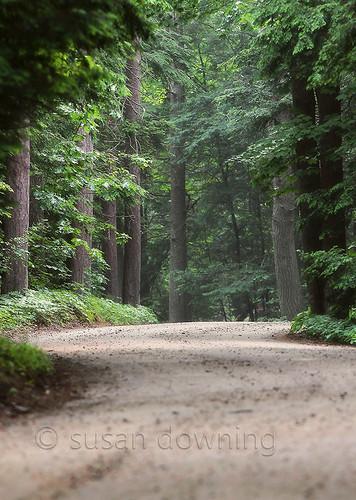 Maine Woods {25/52}