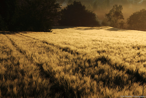 Morning Fields by Dirk Mueller Photography