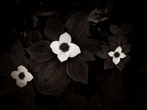 Untitled by Nature Morte