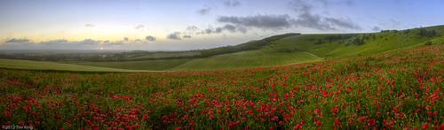 england panorama sunrise unitedkingdom poppy poppies southdowns firle poppyfield firlebeacon westfirle gloriousfool firlebostal autopanogiga southdownsnationalpark