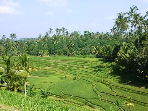 Bali-Route Legian-Jatiluwih (85)