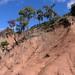 Old cloud forest (that used to be) - Bosque de neblina (anteriormente); área al sur de La Cieneguilla (al noroeste de Santo Domingo Yanhuitlán, Región Mixteca, Oaxaca, Mexico por Lon&Queta