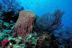 加勒比海島國聖露西亞海域的珊瑚礁(Photo © Chuck Savall / Marine Photobank)