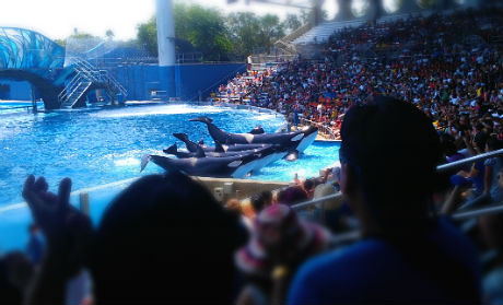 Sea World: Shamu