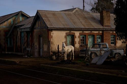 el caballo del pueblo