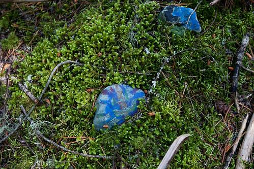 Blau im Moos; copyright 2012: Georg Berg