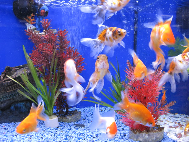 The pet shop fish img 5855 flickr photo sharing for Fish pet shop