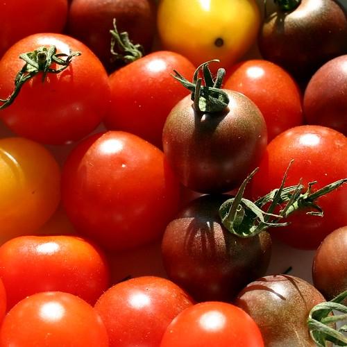Tomato colors I