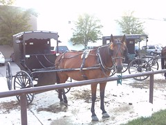 coachman(0.0), amish(1.0), vehicle(1.0), pack animal(1.0), horse harness(1.0), horse and buggy(1.0), land vehicle(1.0), carriage(1.0), cart(1.0),