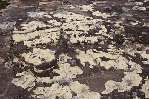 120502-1442.48__Browns Mountain, Kangaroo Valley