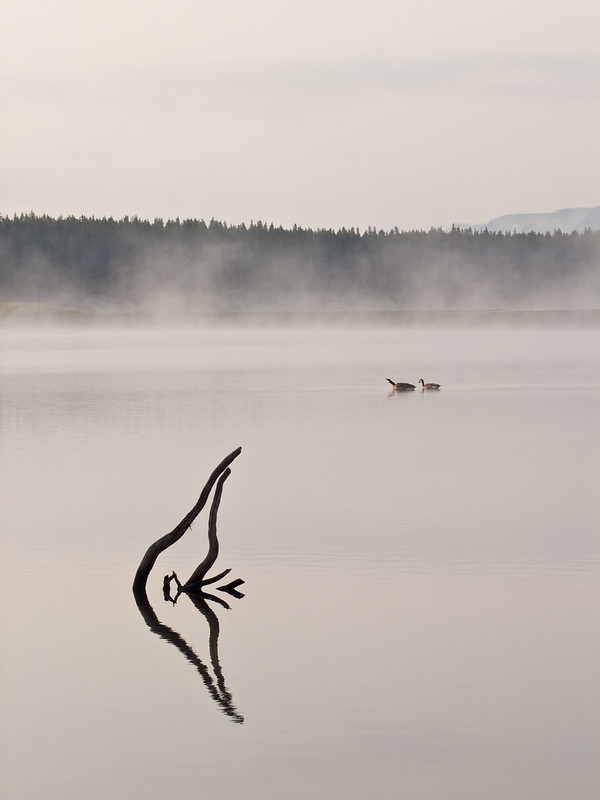 Driftwood reflected on Yellowstone Lake, with morning fog at distance