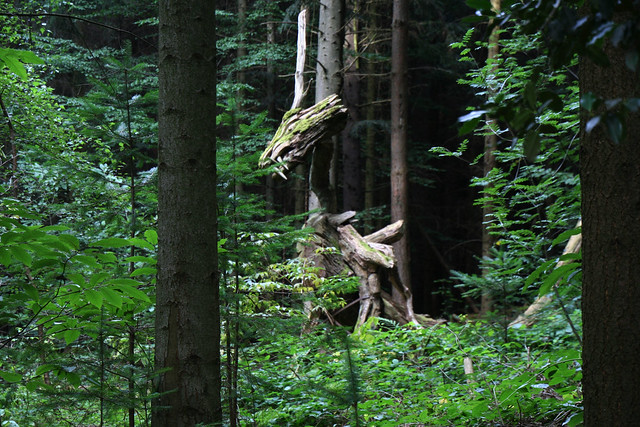 Dragon in the Black Forest