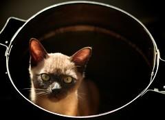 [フリー画像素材] 動物 1, 猫・ネコ, 子猫・小猫 ID:201208251000