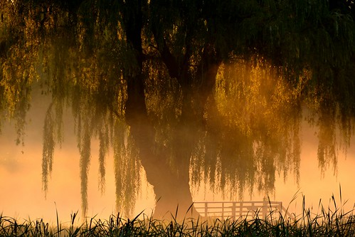 morning mist tree fog sunrise dawn nikon dew willowtree breakingdawn d3100 devilducmike