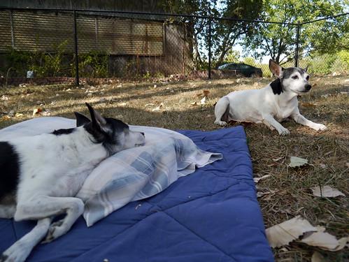 2012-08-19 - Dogs Outside - 0028