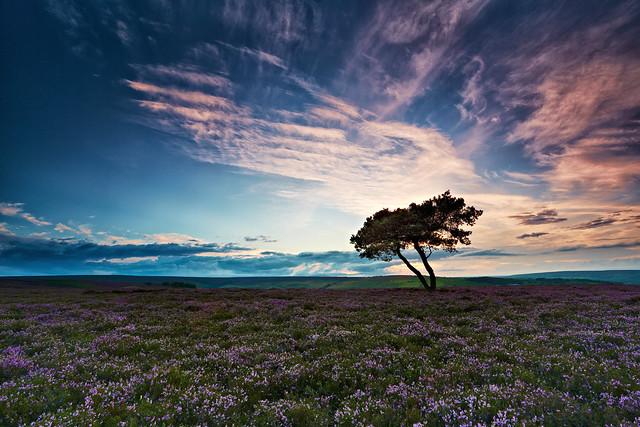 North Yorkshire Moors Lone Tree - Explored 27/08/12
