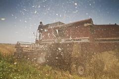 Mechanical wheat harvesting in Pakistan