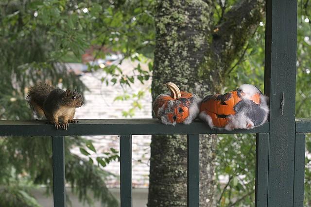 bye-bye pumpkins!