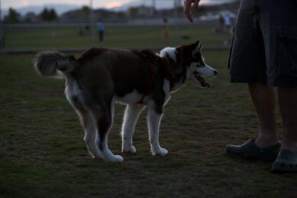 jaxharmon_dogpark_33