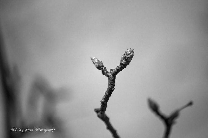 Ault Spring_0063b