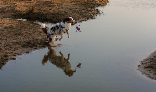 Hunde KW 14 2014