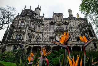 Image of Quinta da Regaleira near Sintra. travel flowers flower travelling portugal gardens architecture garden tile outside outdoors moss travels europe exploring travellers quintadaregaleira sintra gothic travellings steeple unesco adventure explore tiles castelo wildflowers mansion traveling wildflower turret steeples turrets travelers monteiro travelblog portuguesa iberia travelphotography português travelphotographer travelblogs travelblogger travelings travelbloggers travelphotographers travelblogging weekendwayfarers