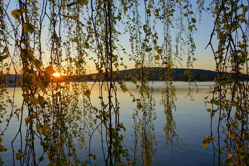lake tree water leaves landscape leaf spring sweden outdoor branches curtain hills serene birch dalarna birchtree