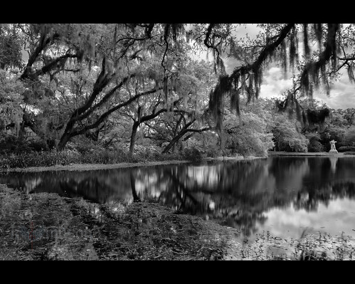 flowers trees bw usa reflection sc water clouds spring pond blossom southcarolina filter lee liveoak spanishmoss bloom hanging murrellsinlet singhray nikonwideanglepcenikkor24mmf35ded