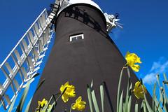 Holgate Windmill, March 2012 (1)