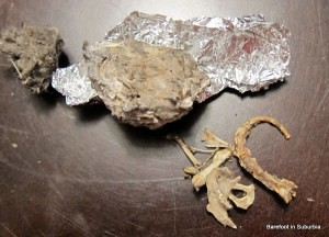 Dissecting Owl Pellets (Photo from Barefoot in Suburbia)