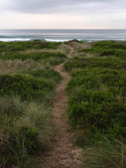 Bermagui dunes