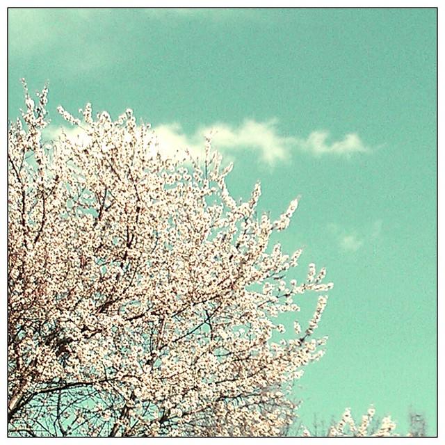 Spring, finally. @ http://frauvau.blogspot.com