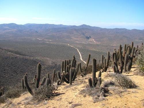Cactáceas en el entorno del Bosque Fray Jorge