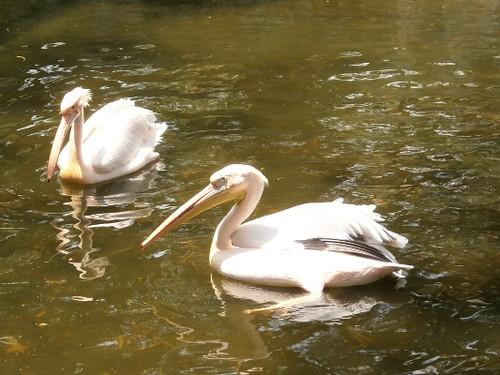 crane-vandalur-zoo-chennai