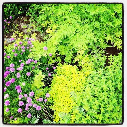 Mammas kryddträdgård