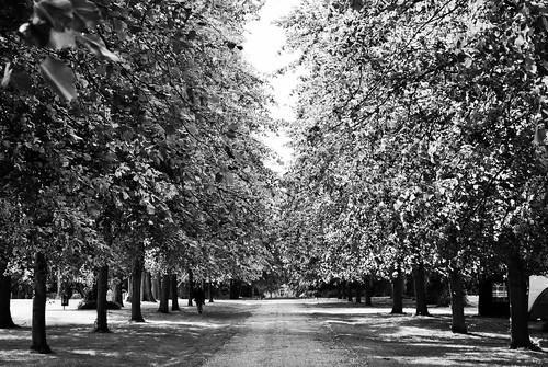 Rufford Abbey Lime Tree Avenue