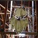 Capteur de rêves et maison longue sur le site traditionnel huron Onhoüa chetek8e, Wendake