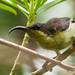 Loten's Sunbird - Female # 23 by Ramakrishnan R - my experiments with light