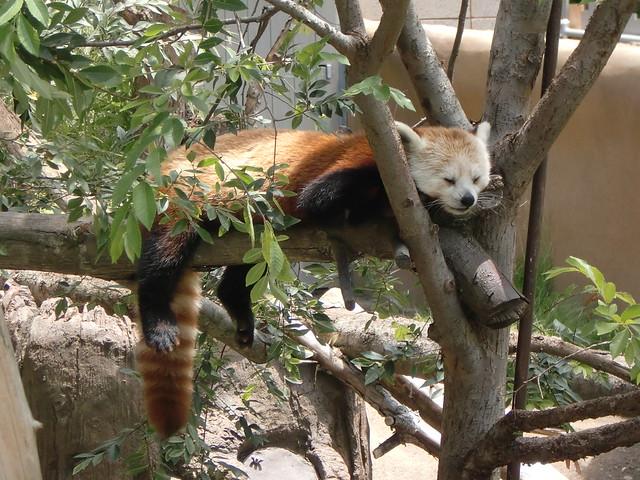 Other Panda