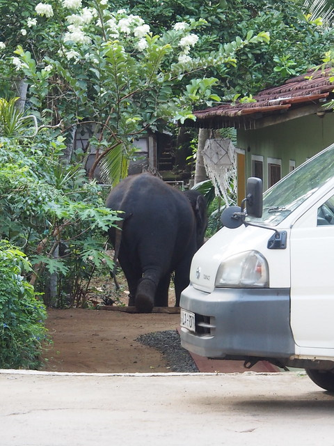 An elephant in a garden
