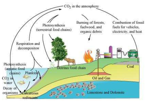 ncert solutions class 12 biology chapter 14 � ecosystem