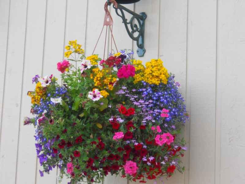 Jardineros en acci n trucos para hacer composiciones de for Plantas de exterior para macetas