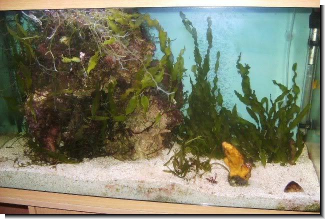 Dmv contact lens remover dmv contact dmv contact lens for Fish tank algae remover