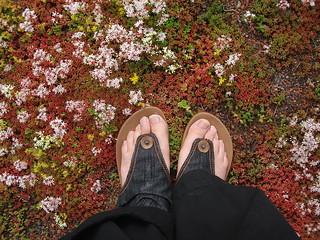 Lisa's feet, Artipelag