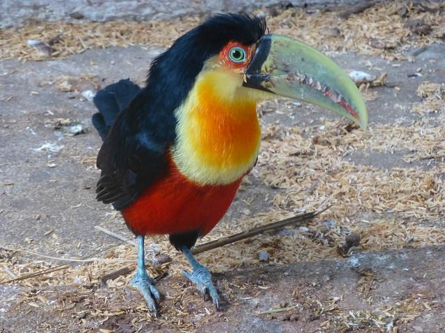 Tuc n en el jard n de los p jaros ober flickr photo for Aves de jardin