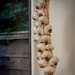Small photo of Allotment garlic