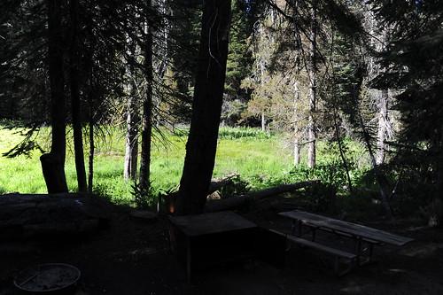 キャンプサイトの前は草原
