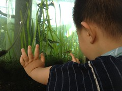 ふれあい植物センターにて (2012/8/19)