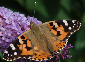 , Bye, Bye Butterflies!